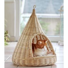 Check this kitty home out!