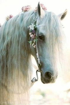 Pretty White Horse animals flowers white pets horse fancy decorated bridle