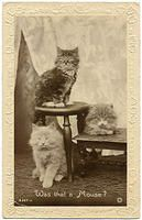 Vintage cats from vintageimages.org