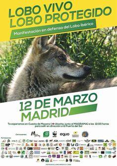 #Madrid Hoy manifestación a las 12h por la protección del #loboiberico #LoboVivo12M #LoboVivo #LoboSi #159 https://domandoallobo.blogspot.com.es/2016/02/159-si-felix-rodriguez-levantara-la.html
