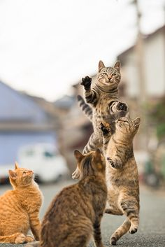 The cat dance