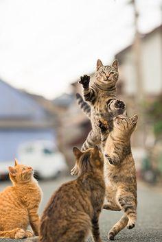 The cat dance