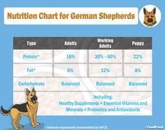 German Shepherd Age Chart