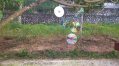 DIY CD Garden Craft