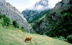 Parque Natural de Ponga #naturaleza #nature #Asturias #ParaísoNatural #NaturalParadise #Spain