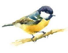 Download Meise-Vogel Auf Der Niederlassung Aquarell-Hand Gezeichnet Stock Abbildung - Bild: 49316621