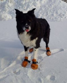 Moya with her SUPER warm Dog Booties. #leather #Canada #handmade #rockwood #ontario #like #daily #fashion #hidesinhand
