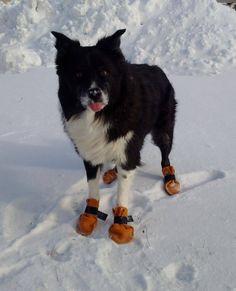 Moya with her SUPER warm Dog Booties. #leather #Canada #handmade #rockwood #ontario #like #daily #fashion #hidesinhand