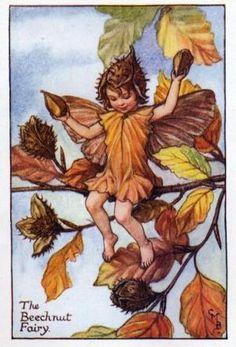 Autumn Fairies:  The Beechnut Fairy By Cicely Mary Barker