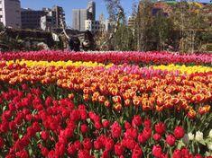 【開催中】一足早く、春の訪れを感じよう。大阪で「真冬のチューリップ祭」開催 | RETRIP[リトリップ]