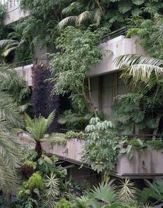 Brutalist icon's secret garden exposed in the Barbican Conservatory, London Green Architecture, Landscape Architecture, Landscape Design, Garden Design, Plant Design, Barbican Conservatory, Brutalist, Garden Inspiration, Daily Inspiration
