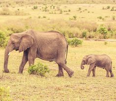 Moms are always there to guide you. One In A Million, Elephant, Around The Worlds, Instagram Posts, Animals, Pictures, Animales, Animaux, Elephants