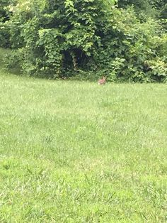 Bunny on the back hill 7/4/16
