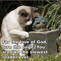 Funny cat meme of cat reading over the should of a statue.