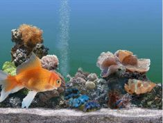 3D Gif Animations - Free download i love you images photo background screensaver e-cards: Aquarium clipart gold fish professional cartoon an...