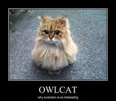 Owls With Cat Heads Are Totally Creepy-Cute
