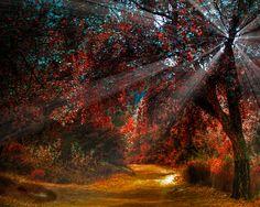 Shimmering lights in forest - Waldweg - Forests Wallpaper ID 895892 - Desktop Nexus Nature