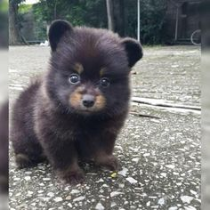 Bear or a dog maybe a bog Cute Baby Animals, Funny Animals, Cute Little Things, Animals Beautiful, Cute Babies, Cute Pictures, Dogs And Puppies, Fill, Baby Animals