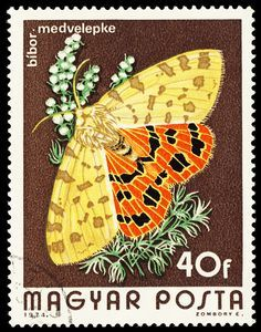 Hungary butterfly postal stamp