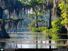 Photo: Wakulla Springs, Florida: home to one of the largest and deepest freshwater springs in the world Old Florida, Florida Usa, Places In Florida, Florida Vacation, Florida Travel, Travel Usa, Florida Trips, Tallahassee Florida, Kissimmee Florida