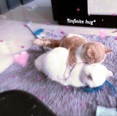 Cute Cat Memes, Cute Love Memes, Funny Memes, Hug Meme, Cat Hug, Kitty Cats, Wholesome Pictures, Cat Emoji, Cat Playground