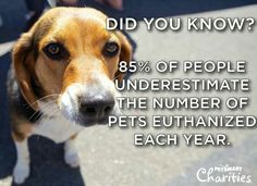 Did you know...85% of people underestimate the number of pets euthanized each year.