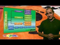 01. La célula. 5º Conocimiento del Medio. Videoprofe.net - YouTube