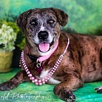 Beautiful Creatures, Animals Beautiful, Allen Texas, Leopard Dog, Foster To Adopt, Large Dog Breeds, Jack Frost, Animal Shelter, Lions