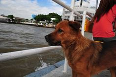 Pooch welfare – Don't let your doggie die on a ferry journey