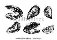Find Vector Mussel Set Hand Drawn Illustration stock images in HD and millions of other royalty-free stock photos, illustrations and vectors in the Shutterstock collection. Fishing Vessel, Chalkboards, Oysters, Inktober, Hand Drawn, Body Art, How To Draw Hands, Royalty Free Stock Photos, Invitations