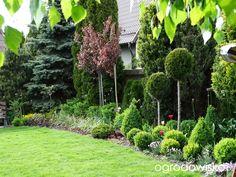 Wizytówka Makowo na Kociewiu - Forum ogrodnicze - Ogrodowisko