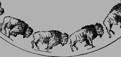 Buffalo Galloping, by Eadweard Muybridge, 1893 (zoopraxiscope) Bison, Eadweard Muybridge, Magic Island, New Scientist, Animation, Optical Illusions, Animated Gif, Buffalo, 3 D
