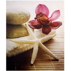 Canvas Wall Art - Red Flower  Star Fish