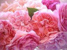 Beautiful flowers in pretty colors.