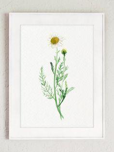 Kitchen Herbs Botanical Natural Gift Set of 12 por ColorWatercolor