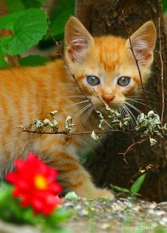 """Staying Focused """" Feral Kitten"""""""