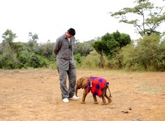 This undated image released by Animal Planet shows retired Chinese professional basketball player Yao Ming with a baby elephant. Ming sets off to help save A...