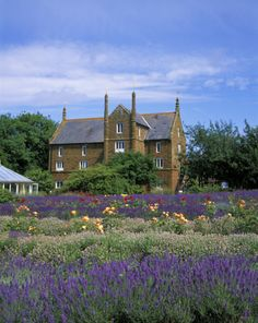Wind the car windows down just before you get to Hunstanton in summer for the heady scent of lavender from this place...