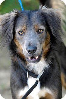 Johnson City, TN - Doberman Pinscher/Retriever (Unknown Type) Mix. Meet biff, a dog for adoption. http://www.adoptapet.com/pet/13966012-johnson-city-tennessee-doberman-pinscher-mix