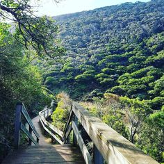 Take me back to when the weather was a lot better   #hiking #lorne #warm #greenery #trees #sunshine #nature #landscape #cardio #walking #happysnaps #meditation #relaxation #happy #love #fitnesslifestyle #fitfam #healthylifestyle #healthy #fitness #healthyliving by alifeinphotos http://ift.tt/1IIGiLS