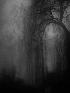 Let us go in; the fog is rising — Emily Dickinson                                                                                                                                                                                 Plus