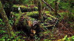 Forest cars old car (1920x1080, cars, old, car)  via www.allwallpaper.in