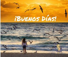 Feliz inicio de semana ... #Margarita #Venezuela #IslaDeMargarita #EcoTurismo #viajar #turismo #aventura #travel #traveling #holiday #vacation #travelling #instatravel #tourist #traveler #instalive #instalife #tourism #tagsta_trave#photooftheday #nature #sunshine #sunnyday #sunnydays by viajesvitolo