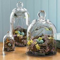 1000 images about cloche decor on pinterest bell jars for Garden cloche designs