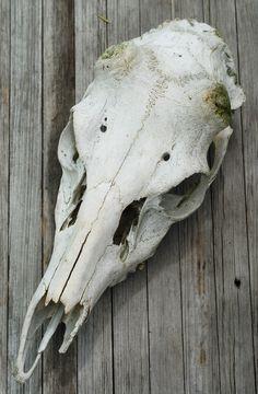 deer skull by Ivixx.deviantart.com on @deviantART