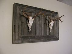 After doing some thinking, I finally decided how I wanted to display a couple deer heads I needed to do a European mount with. I had some old barn wood, so. Deer Skulls, Cow Skull, Deer Antlers, Skull Art, Deer Decor, Deer Hunting Decor, Man Decor, Hunting Stuff, European Mount