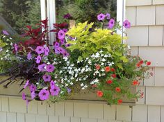 window box | this colorful window box faces east and receives a lot of morning sun ...