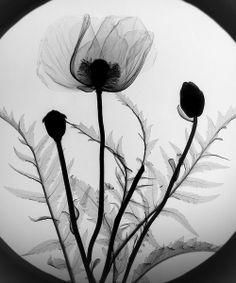 x ray art | Tumblr
