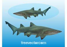 Gráficos Tubarão