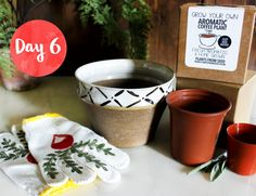 Win this urban garden set which includes: hand-painted gardening gloves, a ceramic designer planter and all you need to grow your own aromatic coffee plant.   Hosted by Style & Spice